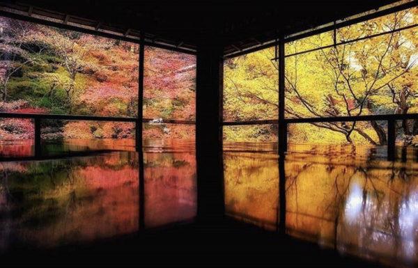 最高に素敵な京都の秋を着物で満喫♪