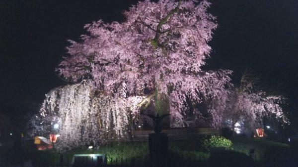 3月春のライトアップは延長営業!!