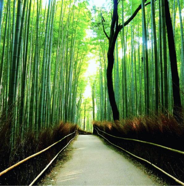 京都で穴場のインスタ映えスポットへ着物を着て行こう!